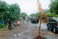 Pohon Pisang Ditanam Tengah jalan di Kabupaten Pinrang, Viral lagi